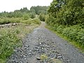 Forestry Road, Laurieston Forest - geograph.org.uk - 484869.jpg