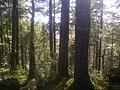 Forests of the Eastern Shore Granite Ridge.jpg