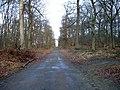 Foret de Carnelle - Route de la Pierre Turquaise.jpg