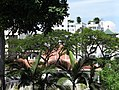 Fort Canning Park Scene - Singapore - 03 (35324899970).jpg