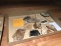 Foulden-maar-fossils.png