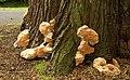 Fungus, Antrim - geograph.org.uk - 880503.jpg