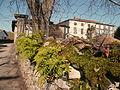 Gajan - Polypodes sur un mur - 20110306 (1).jpg