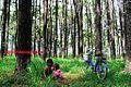 Gambar hutan pinus banjarbaru dekat irigasi banjarbaru - panoramio.jpg