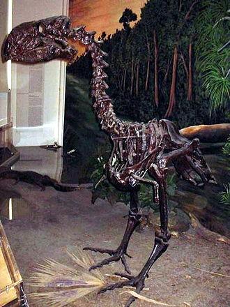 Paleocene - Gastornis
