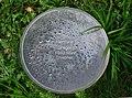 Gedenkstätte im Schulpark Amstetten, Hermine Greger.jpg
