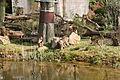 Gelsenkirchen - Zoom - Asien - Macaca nemestrina 03 ies.jpg