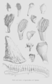Geology and Mineralogy considered with reference to Natural Theology, plate 24.png