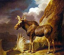 George Stubbs- The Moose.JPG