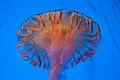Georgia Aquarium (4663503414).jpg