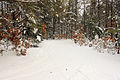 Gfp-wisconsin-mirror-lake-state-park-snowy-trail.jpg