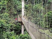 Ghana footbridge2.jpg