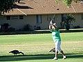 Golfing in Sun City AZ, USA.jpg