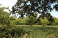 Good Easter, Essex, England - overgrown orchard on road to ford over River Can east of Good Easter village.JPG