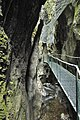 Gorges de la Fou, France 14.jpg