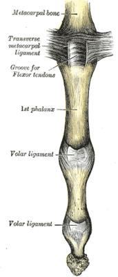 Межпястный сустав ушибла голеностопный сустав