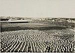 Great White Fleet at the Sydney Cricket Ground (7800044518).jpg