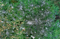Greater Manchester Satelite View bright.png