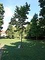 Green Zone Tree, Castle Park, 2020 Sárvár.jpg