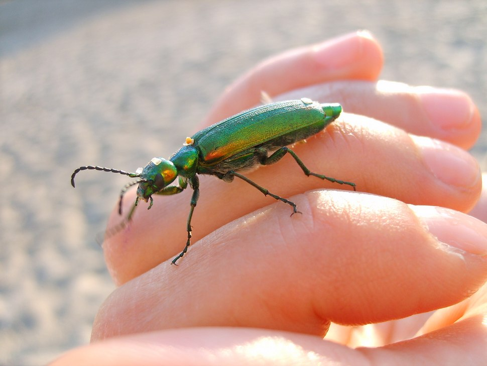 Green insect on hand