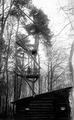 Grenzbeobachtungsposten im Wald - CH-BAR - 3236853.tif