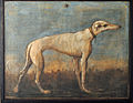 Greyhound, Giandomenico Tiepolo.jpg