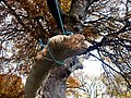 Grotesque limb - geograph.org.uk - 1045592.jpg