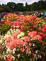 Gryshko botanical garden (May 2018) 11.jpg