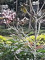 HK 中環 Central 遮打花園 Chater Garden flora green leaves n trees March 2020 SS2 24.jpg
