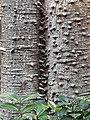 HK 香港公園 Hong Kong Park 植物 樹木 plant tree green leaves December 2020 SS2 01.jpg
