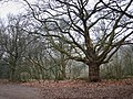 Hampstead Heath - geograph.org.uk - 1125652.jpg