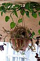 Hanging Nest.jpg