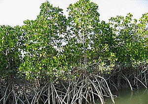 Mangrove forests of Qeshm - Hara Forests in Qeshm