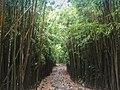 Hawaii Maui Bambuswald (22028566393).jpg