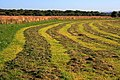 Hay Field, Near Summerfield Farm - geograph.org.uk - 1481412.jpg