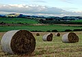 Hay Making - geograph.org.uk - 535337.jpg