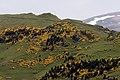 Highland Yağmurca - Yağmurca Yaylası 04.jpg