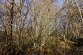 Hike along the Viéran river (49601498301).jpg