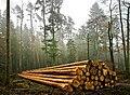 Holznutzung Embrach.jpg