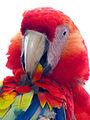 Honduras-0140 - Macaw at Copan (2213587821).jpg