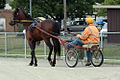 Horse Trotting (6700570083).jpg