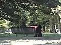 Huge black dog, Milan, Italy (9471317963).jpg
