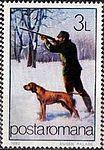 Hunting-Dog-Canis-lupus-familiaris.jpg