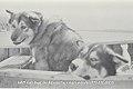 Huskies in a canoe, Aklavik - N-1979-050-0003.jpg