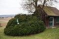 ID 889 Buchsbaum 002.jpg
