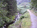 In Achray Forest - geograph.org.uk - 624456.jpg
