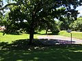 In the shade of a tree at Watson park.JPG
