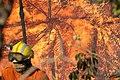 Incêndio no Parque Nacional de Brasília (36529697800).jpg