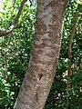 Inkwood - panoramio.jpg
