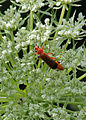 Insekt08072012 4.jpg